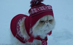 """lucifurfluffypants: """" Winter is cold. """""""