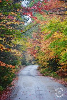 Indian Summer Roadtrip Photo by Benjamin Nicolaus Ma — National Geographic Your Shot National Geographic Society, National Geographic Photos, Indian Summer, Forest Road, Your Shot, Canada Travel, Amazing Photography, Travel Inspiration, Royalty Free Stock Photos