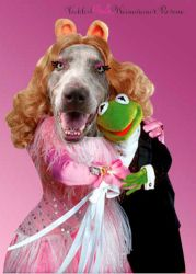Miss Piggy is an adoptable Weimaraner Dog in Albuquerque, NM.  AN INTERVIEW WITH MISS PIGGY:  Tickled Pink: Welcome, Miss Piggy. Tell us about yourself.  Miss Piggy: Moi never reveals her true age but...
