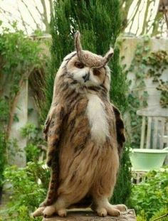 You will never be as cool as this owl. (Avian Thug Life).