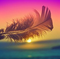Feather in the sun