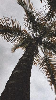 Palm Vibes