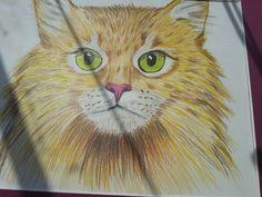 Sesimtaki kedinin resmini gönder resmini yapalım  1967sesim@gmail.com