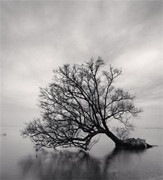 Photo by Michael Kenna, a wonderful photographer.  I'm amazed how the lower branches just graze the surface of the water.