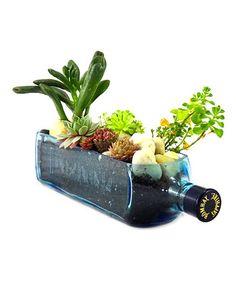 Another great find on #zulily! Bombay Sapphire Bottle Garden by Rehabulous #zulilyfinds