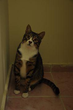Efe Cat | Pawshake