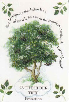 Elder Tree - The Elder Mother - Queen of Herbs Tree Magick by Gillian Kemp