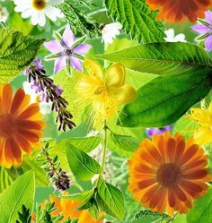 manual completo del cultivo y uso de plantas medicinales y aromaticas