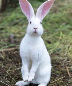 Rabbit by Vadim - Photo 56273632 / Animals And Pets, Baby Animals, Cute Animals, Animals Photos, Baby Bunnies, Cute Bunny, Beautiful Creatures, Animals Beautiful, House Rabbit Society