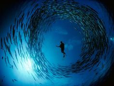 Surrounded by Barracuda
