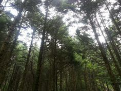 forest 숲