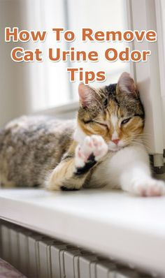 How To Remove Cat Urine Odor - Tips...#HowTo, #Remove #Cat, #UrineOdor, #Tips