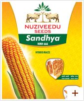 Maize : Sandhya – NMH 666  Plant Height : Tall(230-270cm)  Duration : Kharif: 105 – 110 Days  Cob Placement : Low  Grain Type and Colour : Semi-flint with dull yellowish orange colour  Special Features / USPs :         * Suitable for high density planting (60×20 cm spacing)      * cob is long with high shelling percentage i.e. 82%      * High yielder under good management      * Suitable for irrigated conditions