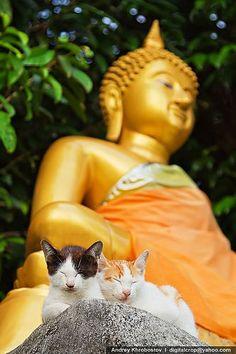 Como  todo el mundo sabe, los gatos están en perfecta armonía con todo tipo de dioses.
