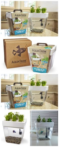 An Aquarium for your Fish and Growing Herbs. This is a fun activity for the whole family, learn to take care of fish and learn to grow your own herbs at the same time!