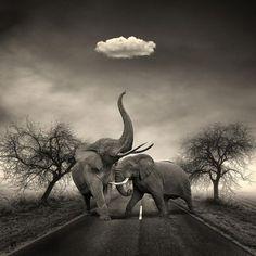 Elephant's,<3