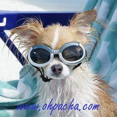 Jamais sans mes lunettes ❤ Lunettes pour chien silver. Disponible du XS au L à partir de 23,90 €. Boutique Oh ! Pacha : http://www.ohpacha.com/71-lunettes-pour-chien