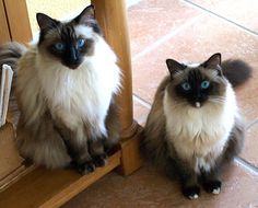 Love happy endings? Find out how Wasabi and Ginger here got their Forever home together.