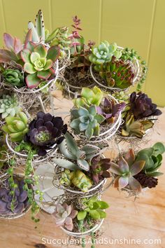 A Variety of Succulents in a Cupcake Stand - Succulents and Sunshine