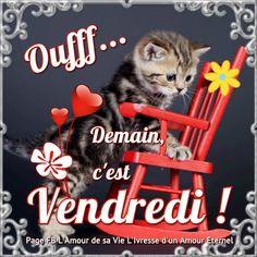 Oufff... Demain, c'est Vendredi ! #demaincestvendredi chat chaton mignon rocking chair coeurs