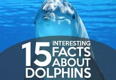 Dolphins have always been a great fascination to humans. They  have been…