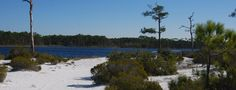 Protecting more than 3 miles of oceanfront on the Gulf of Mexico, Topsail Hill Preserve State Park has an extensive day hiking trails system with over 15 miles of hiking. Hiking In Florida, Gulf Of Mexico, Hiking Trails, State Parks, Wander, Things To Do, River, Explore, Preserve