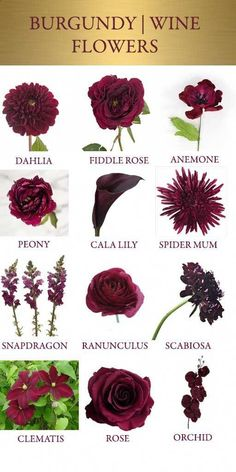 These deep pink and burgundy wedding flowers are beautiful options for fall wedding flowers. These would look beautiful in a bridal bouquet, wedding centerpiece or wedding reception / wedding ceremony floral arrangement. Perfect Wedding, Dream Wedding, Wedding Day, Trendy Wedding, Wedding Gold, Wedding Tips, Sweet Heart Table Wedding, Elegant Wedding, Merlot Wedding