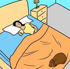 Fantástico! 7 vantagens de compartilhar a cama com seu patudo! - # #cães #cama #dormir