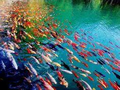 Medio ambiente , lleno de color www.grupotecnam.com