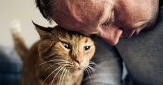 Come far capire al gatto che gli vuoi bene Animals, Animales, Animaux, Animal, Animais