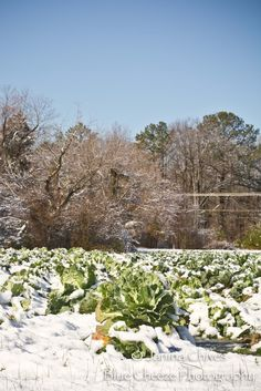 Blue Cheeze Photography: Snow Day in Richmond! #snow #photography #richmond #nature