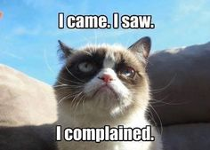 I love you Grumpy Cat. cats Grumpy Cat You are funny. Grumpy Cat Quotes, Funny Grumpy Cat Memes, Funny Cats, Funny Animals, Funny Memes, Grumpy Kitty, Funniest Animals, Funny Quotes, Hilarious Jokes