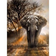 Diamantmalerei - Wilder Elefant Diamond Painting Type: Full Diamond Painting with Full Drill Diamond Photo Elephant, Bull Elephant, Elephant Love, Elephant Quotes, Elephant Pictures, Elephant Pattern, Elephant Photography, Animal Photography, Forest Photography