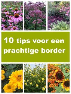 Waar moet je op letten als je een border gaat aanleggen? In deze blogpost geef ik je tien tips die je kunnen helpen om van jouw border een prachtig geheel te maken.