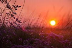 режимный свет, поле, природа, цветы