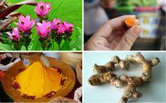Wunderwurzel Kurkuma: 5 der besten Vorteile