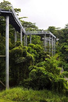 Project: Alexandra Arch & Forest Walk  Designer: LOOK Architects Location : Southern Ridges, Singapore
