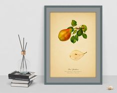 Vintage art poster botanical Pear picture antique home rare picture wall living room image wall print cubicle decor drawing watercolor art Picture Wall Living Room, Living Room Images, Rare Pictures, Cubicle, Geometric Art, Wall Prints, Vintage Art, Wall Art Decor, Watercolor Art