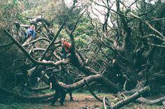 friends in a tree