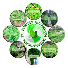 Menjual Bibit Gaharu (Agarwood) Aquilaria Malaccensis asli kalimantan. Siap melayani pemesanan untuk seluruh wilayah Indonesia. Spesifikasi Harga Bibit Gaharu:  1. Tinggi 20 cm 60 cm Rp. 3.000, -/bibit (polibag) 2. Tinggi 5 cm 15 cm Rp. 1.000, -/bibit (non polibag) 3. Biji Gaharu Rp. 600.000, -/kg (kunjungi website kami untuk update info harga terbaru)  http://bibitgaharuku.wordpress.com  Contact : 085272223447 / 081953631776 Lokasi : Banjarbaru (Kalimantan Selatan)