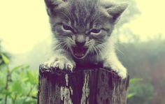 "Mogley- ""rahsa, when does the tiger roar?""   Rasha- ""i dont know?""   Mogley- ""after he catches his prey...""   Rasha-""oh... his prey...."" (hehehe joungle book 2)"