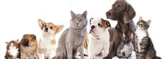 Dog and Cat Populations Are Approaching Human Numbers - Where Are the Pooch and Kitty Loos? http://www.organiclifestylemagazine.com/dog-and-cat-numbers-are-approaching-human-population-where-are-the-pooch-and-kitty-loos