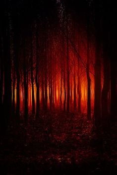 [The air had a sickly charred smell of meat with a greasy oil permeating the leaves and wood.]