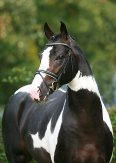 """Noseband.. You wouldn't want your mouth taped shut, so why would do it to your horse that you say you """"love"""" so much!!"""