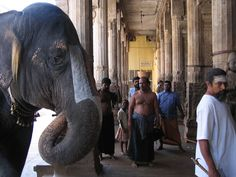 trichy tempel elefant