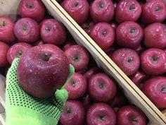 青果物の流通  ソーシャルメディアアグリ「地場活性化」のために: 高値続きのりんごも息切れか?