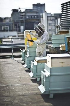 The Bees of Buckingham Palace . Fortnum and Mason London has 4 colonies of bees on their roof. Honey has a waiting list. Bee Hive Stand, Farming, Bee City, Bee Friendly Plants, Bee Supplies, Bee Boxes, Fortnum And Mason, Worm Composting, Save The Bees