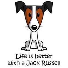 La vie est plus belle avec un Jack Russel :) Perros Jack Russell, Chien Jack Russel, Jack Russell Terriers, Jack Russell Dogs, Fox Terriers, Bull Terrier Dog, Terrier Mix, I Love Dogs, Puppy Love