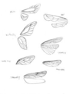 Tinkerbell 3 - Carolyn Gair - wings ✤ || CHARACTER DESIGN REFERENCES |