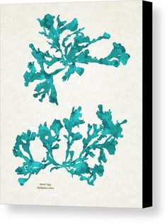Ocean Seaweed Plant Art Phyllophora Rubens Canvas Print by Christina Rollo.  All canvas prints are professionally printed, assembled, and shipped within 3 - 4 business days and delivered ready-to-hang on your wall. Choose from multiple print sizes, border colors, and canvas materials.